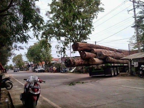 Trailer Pengangkut Kayu Glondongan Melesak di Gudang MWM | Koran Online Pekalongan Dan Sekitarnya
