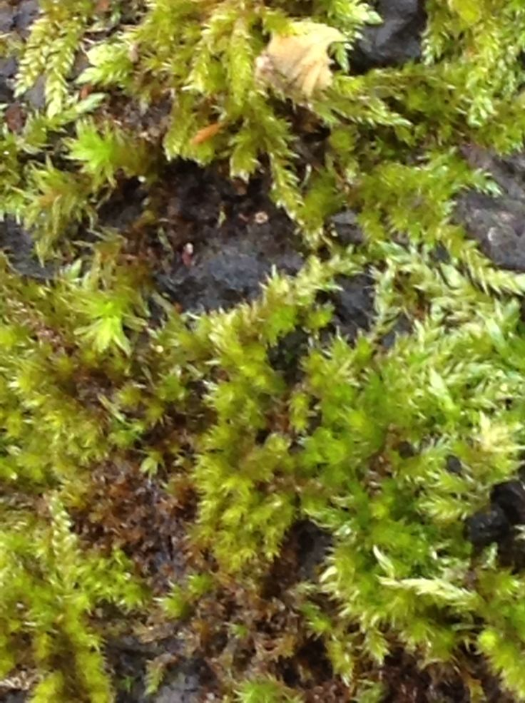 Moss developing in a wet woodland area..