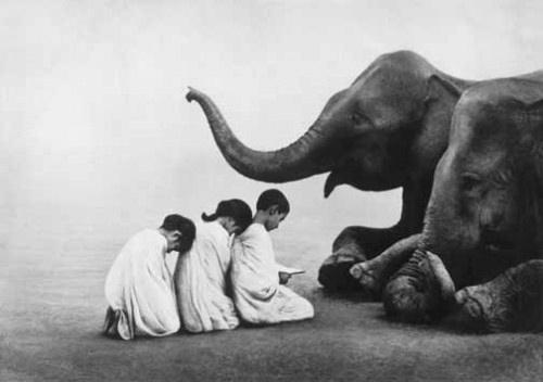 Gregory Colberte: Elephants, Photos, Animals, Art, Snow, Gregory Colbert, Gregorycolbert, Photography