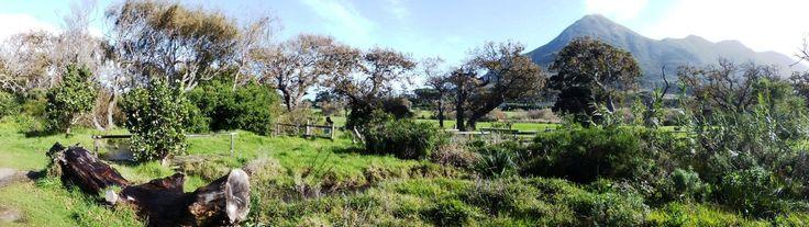 Noordhoek Common