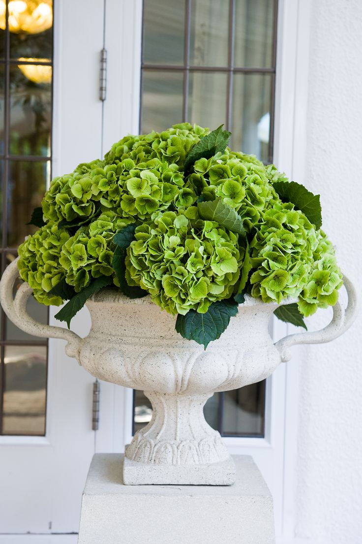 Bright green hydrangea in white stone urns - I really love urns. I think that they are so much more prettier than just regular pots.There's a certain elegance about them.