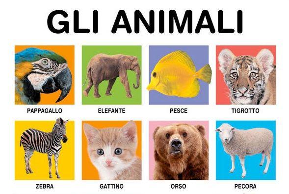 Libri fotografici con animali per bambini da 0 a 2 anni - ilPrimoSenso