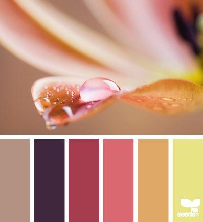 Design Seeds® Enclosed - becky.romero@gmail.com - Gmail
