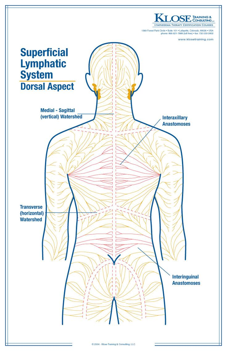 10 Images About Anatomy For Massage Therapists On