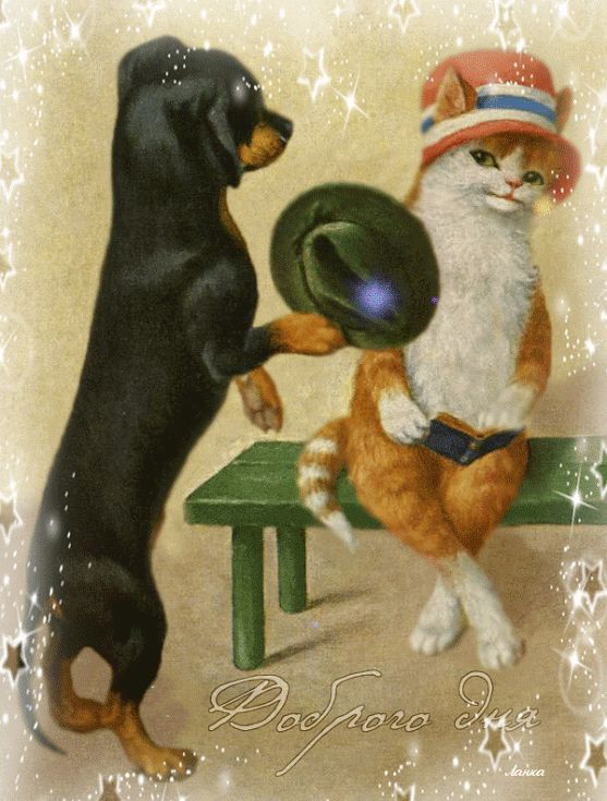 Пёс джентльмен и леди Кошка, Фото животных