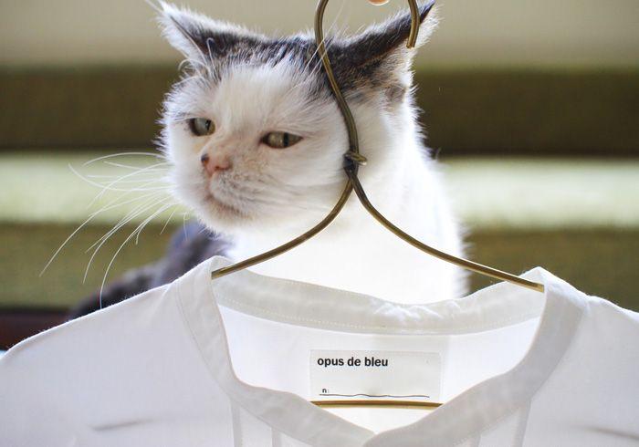 """""""不思議顔の猫""""、まこの目を通して見た、おしゃれな暮らしぶりを紹介。ユニセックスな仕立てのボタンダウンシャツの素敵さについて、憧れを込めて語ってくれました。"""