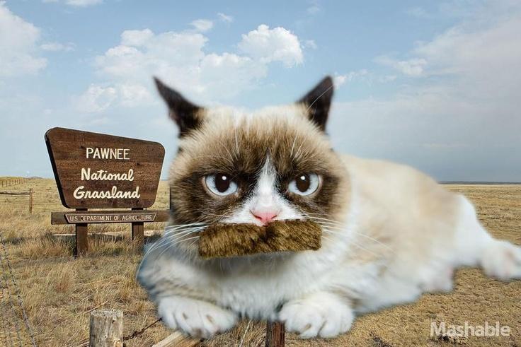 Ron Swanson Grumpy Cat
