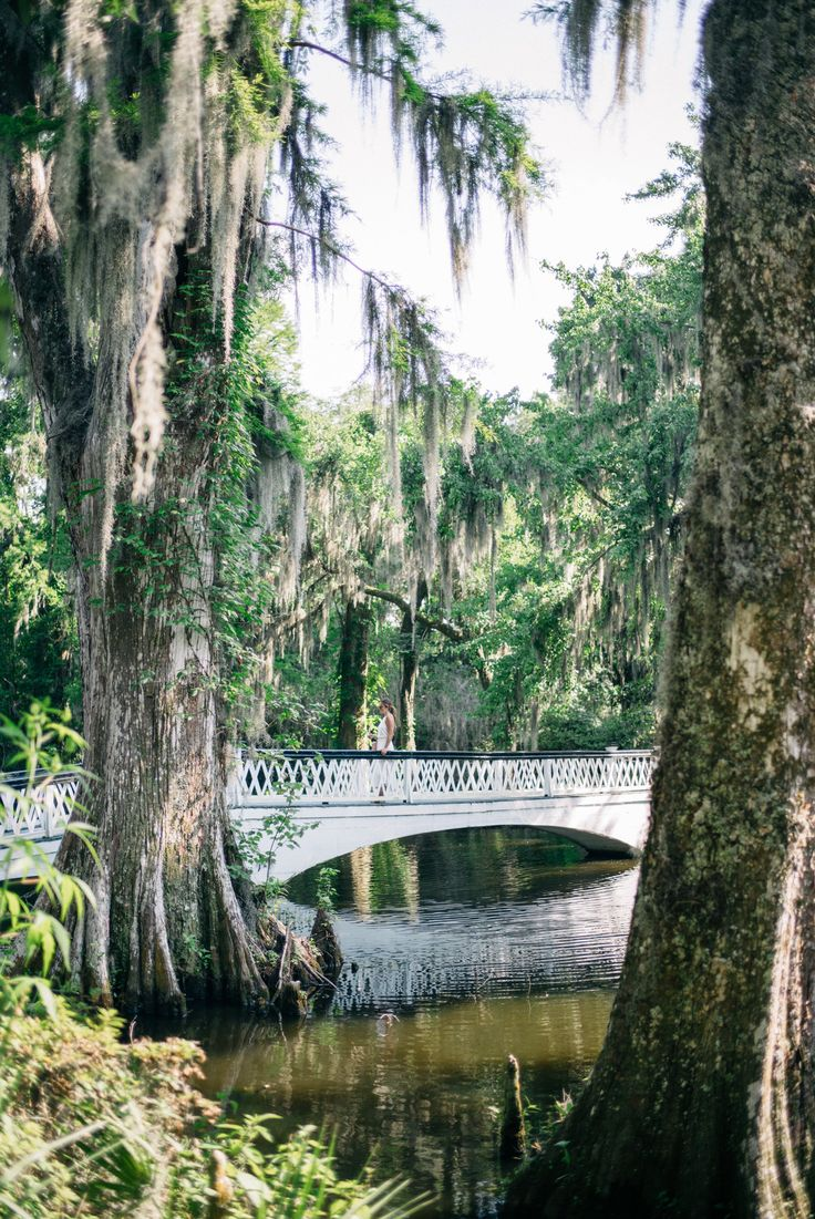 Magnolia Plantation Charleston, South Carolina