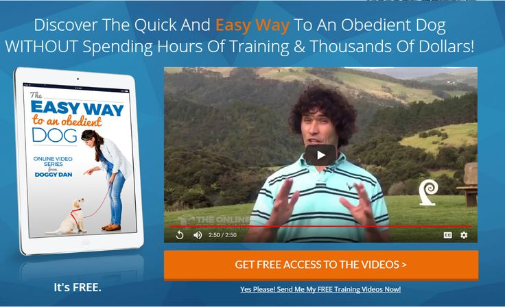 Discover the quick and easy way to an obedient Dog Without Spending Hours of Training & Thousands of Dollars