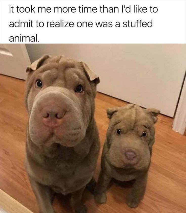 Funny Animal Picture Dump Of The Day 24 Pics: 2481 Best SHAR PEI Images On Pinterest