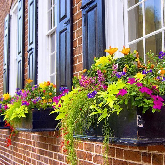 Flower Window Baskets : Best ideas about outdoor flower boxes on