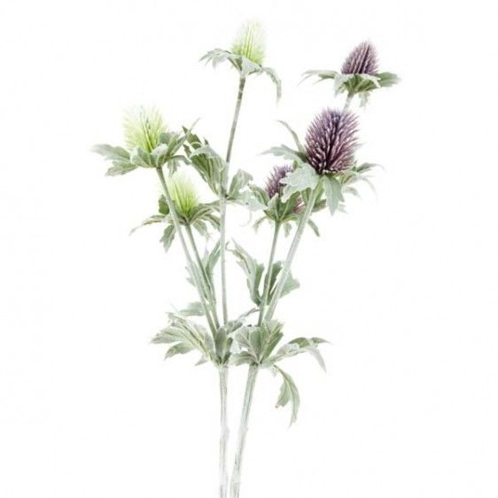 Mauve thistle would be a good replacement for the everlasting paper daisy