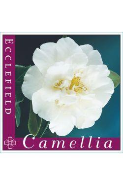 Camellia Ecclefield