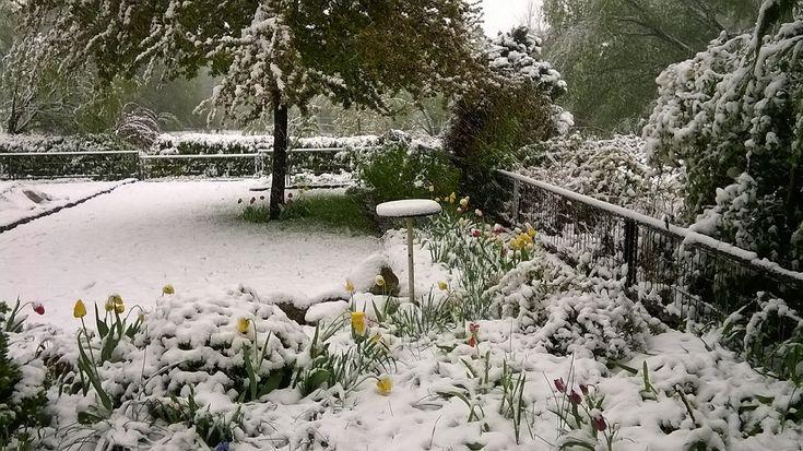 Áprilisi hó - A március végi néhány napos nyár után a dühös április megmutatta milyen a tavaszi tél. Mintha az áprilisi időjárás a megszokottal dacolva eszelősen kiáltozná csak azért is, csak azért is még egy kis tél, még egy kis hó… (Fotó: Németh György – Kerepes)