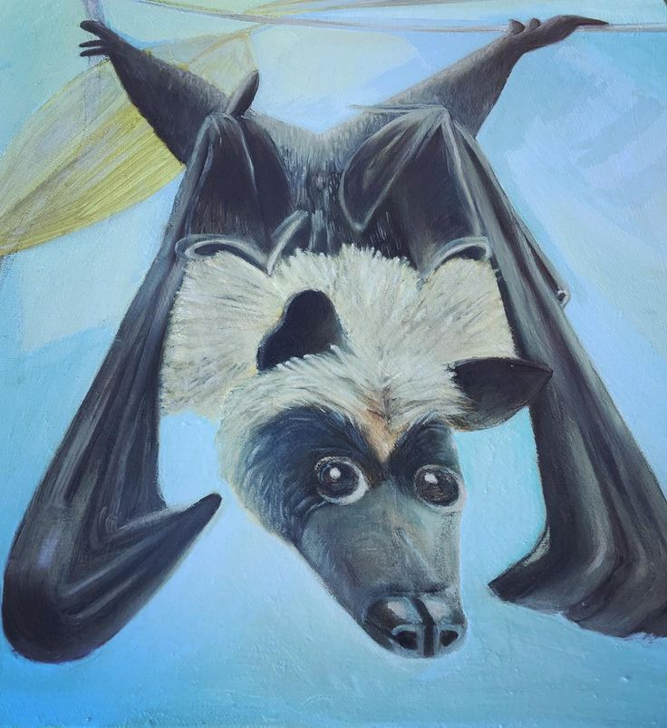 Another Flying Fox Picture(in oil paint.)I wanted to copy the same detail as I did with the charcoal picture,yet change the dynamics of the Fox#flyingfoxfreak