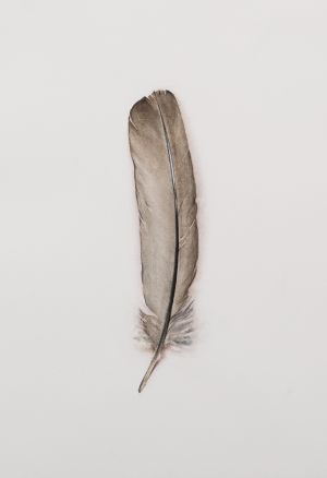 Saara Vainio: Sulka / Feather. Watercolour, 14 x 18 cm. 2011