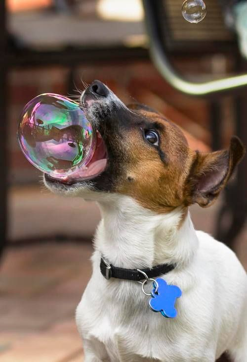 Pensa numa delicadeza pra segurar essa bolha!