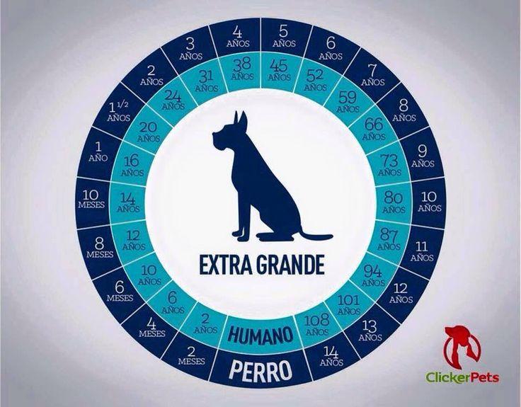 DOGs▶ http://Pinterest.com/RamiroMacias/Dogs