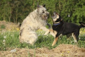 How to Help Two Dogs to Get Along When One Is Aggressive   eHow
