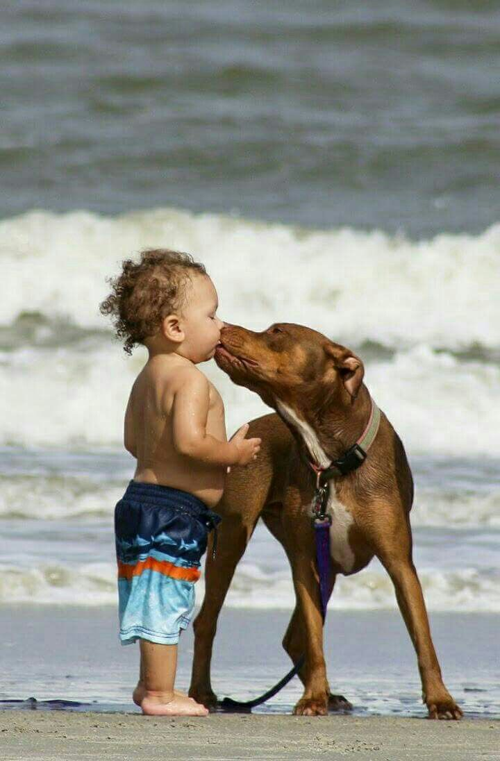 best animals images on pinterest pets fluffy pets and pup