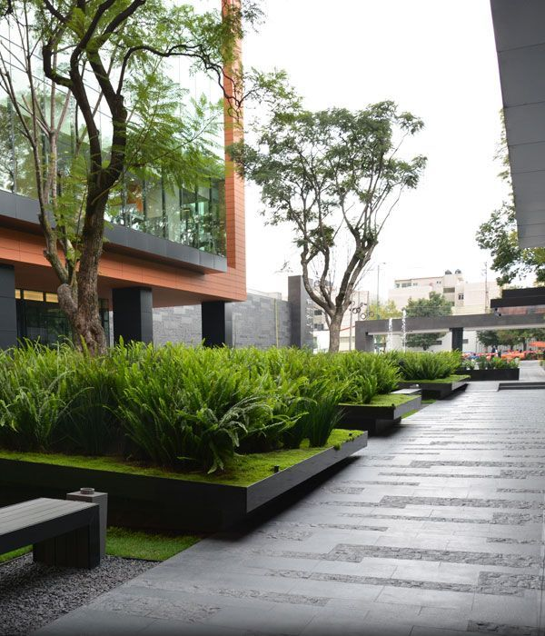 "Raised bed fern planters. ""Low maintenance plants that are indigenous to the area were used to cut down on water usage."" Coyoacán Corporate Campus."