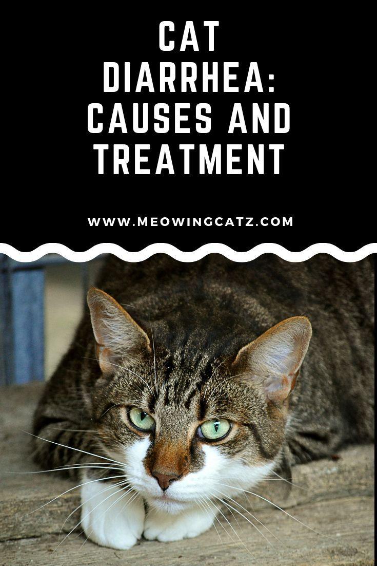 Cat Diarrhea Causes Symptoms And Remedies Cat Diarrhea Cat Care Cat Care Tips