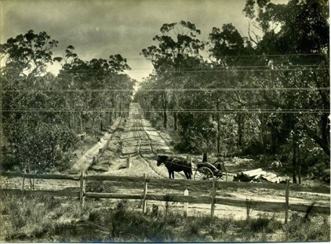 As the settlers travelled over the Blue Mountains in search of GOLD and a new beginning. their journey was tough. This photo is pure 'GOLD' as it shows just how tough the journey was in an era long gone. This is a rarely seen photo of the original crossing of the Blue Mountains.