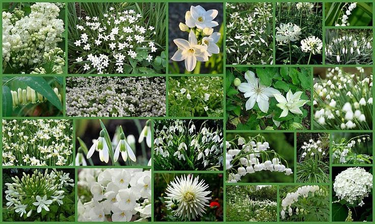 Good flowers to use to create a white garden