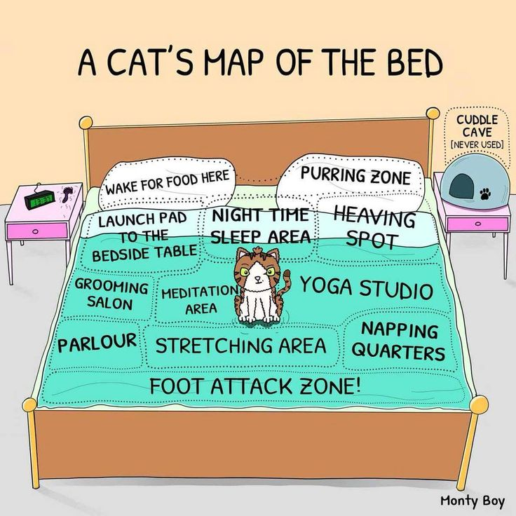 omg! this reminds of my old cat every night he would come and do these things to me!!!