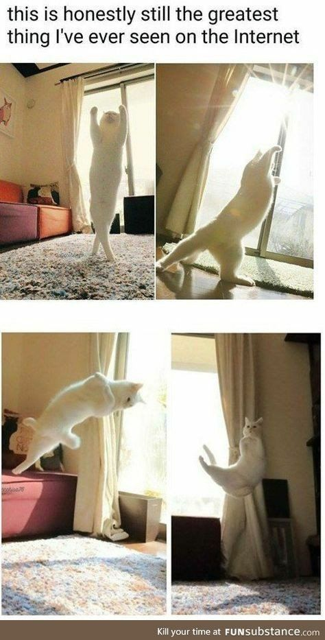 Pretty dancer  #catsandkittens #funnycats #Kittens #pets