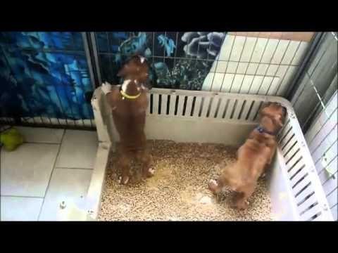 Litterbox training - YouTube