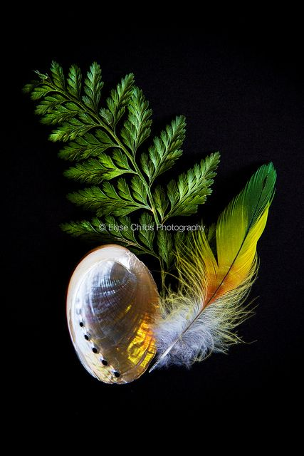 Still life with Rainbow Lorikeet feather, Paua Shell and New Zealand Fern | © Elyse Childs Photography
