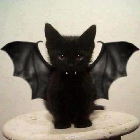 Vintage Halloween Clip Art | vintage halloween clip art black cat html filesize 1092x1500 216k