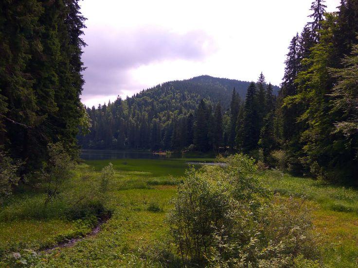 Озеро Синевир, водопад Шипит, бурые медведи, подъемник на гору с невероятным видом на горы, горные ягоды, все это лишь часть красоты Закарпатья