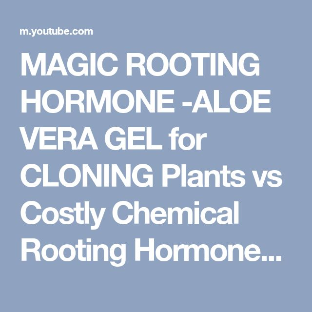MAGIC ROOTING HORMONE -ALOE VERA GEL for CLONING Plants vs Costly Chemical Rooting Hormones - YouTube