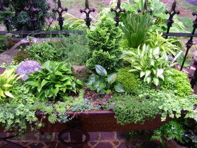 love this! perfect for miniature hostas