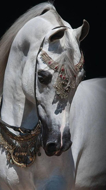 Arabian horse - Drinkers of the Wind