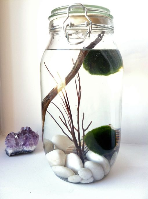 how to create an aquatic habitat for a marimo moss ball...I found the Marimo moss balls at petsmart :) looking forward to another pinterest success :)