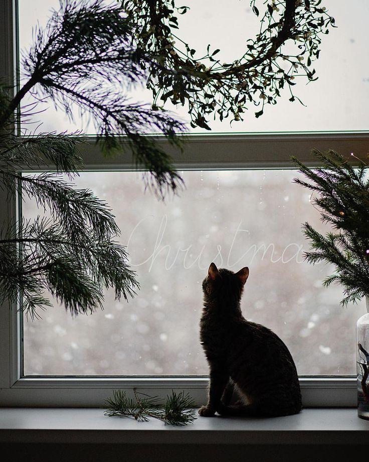 #allthebeautifulthings #winter #cozywinter #december #christmas #waitingforchristmas #christmasmagic...