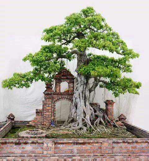 25 Best Ideas About Bonsai Garden On Pinterest Bonsai