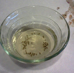 How to kill fruit flies naturally!  All you need is a bit of cider vinegar, a few drops of dish soap, and a few hours. In a small bowl, pour a bit of cider vinegar. Add an equal part of water so that you don't have to use so much vinegar. Add 2-3 drops of dish soap and gently stir with your finger. Place the bowl near your fruit and leave it alone.