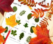Nature detectives (autumn games and factsheets)