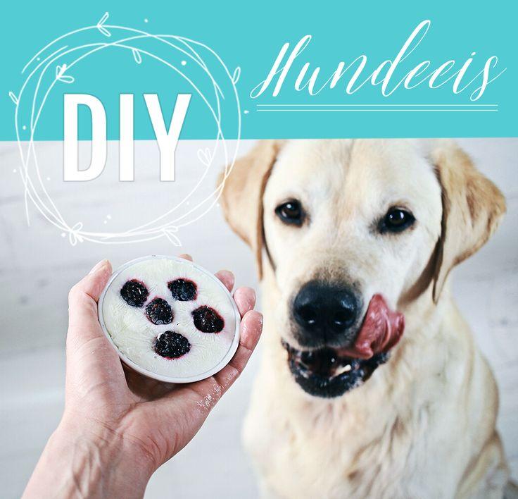 DIY Dog Ice Cream – Machen Sie Frozen Yogurt Ice Cream – Do It Yourself