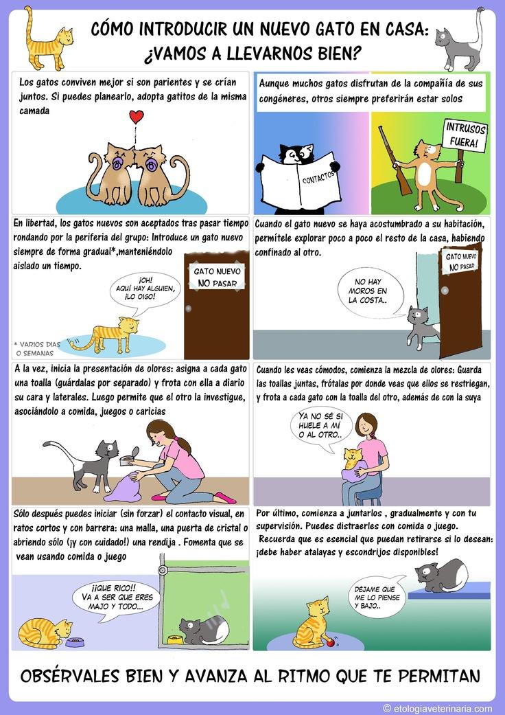Introducción de un segundo gato en la casa