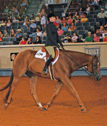 Breeding for a Hunt Seat Horse