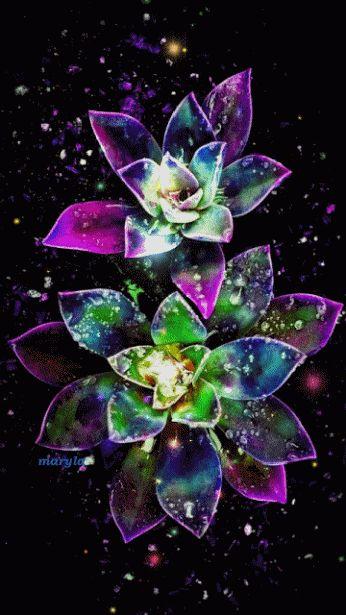 خلفيات ملونه فلاشيه 5fc57a20f3cf9346b79e6119272b468a--beautiful-gif-beautiful-flowers