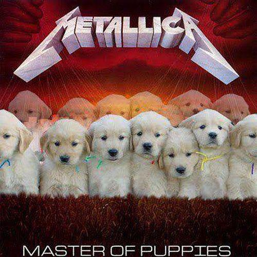 True Metalhead: Best of August Metal Memes
