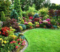 Обзор лучших сортов декоративных кустарников для обустройства сада