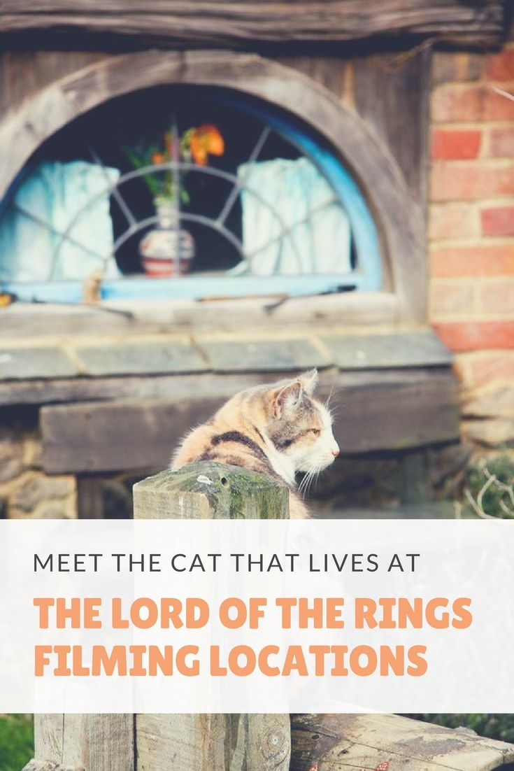 Meet Pickles, the cat that lives at the Lord of the Rings filming locations in New Zealand. Click here for more info and pictures: http://www.traveling-cats.com/2015/09/cat-from-hobbiton-new-zealand.html (New Zealand Travel Tips, New Zealand, Hobbiton, cats, The Lord of the Rings filming locations, filming locations in New Zealand)