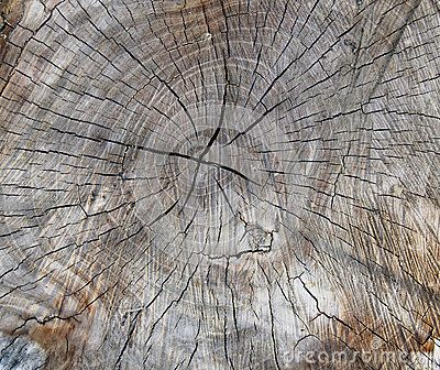 Section of an old cut tree trunk with radial cracks. The tree rings are visible over the brown wood color.